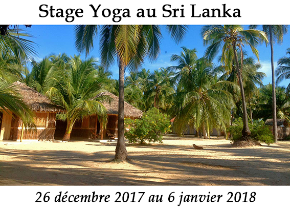 Stage de Yoga au Sri Lanka